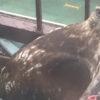 hawk-eats-pigeon-nyc-fire-escape